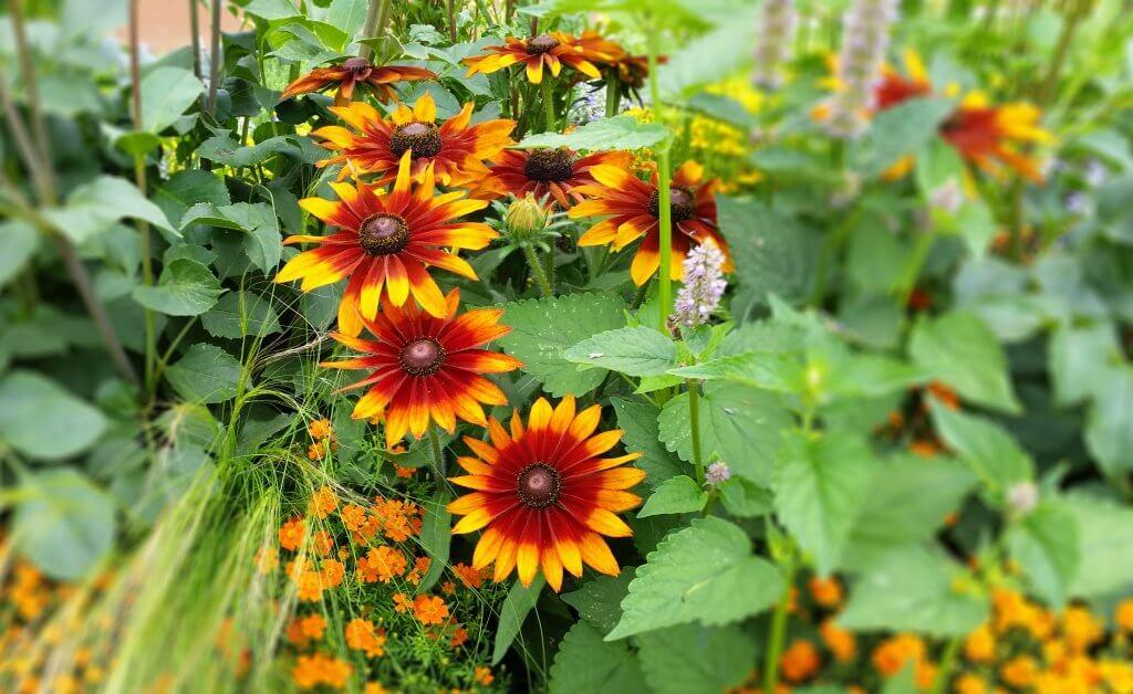 Beet- und Balkonpflanzen: Orange Blüten