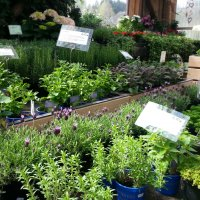 eigenproduzierte Pflanzen